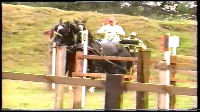 Holy Cow!!  Carriage Driving was Crazy in 1985!