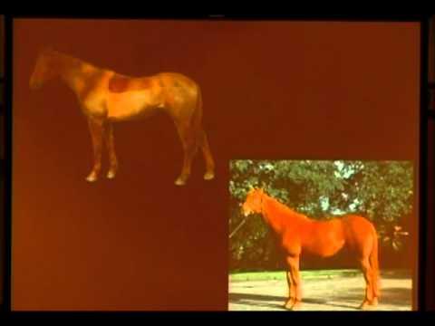 Pet Peeves of a Dressage Horse Veterinarian
