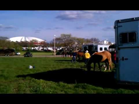 Cyndi Plasch beating horse with plastic bat at Midwest Horse Fair