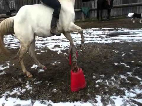 The Girl Who Didn't Give Up On Her Blind Horse