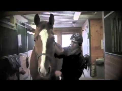 UNDIVIDED: Horse Jumping