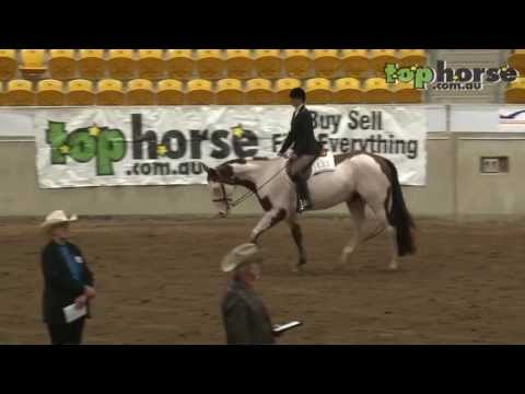 PHAA National Championship Show - 4YO Hunter Under Saddle