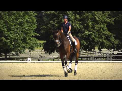 Dressage - In Pursuit of Perfection