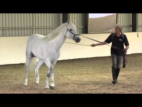 DVD Clip: Manolo Mendez introduces an inexperienced horse to lunging and changes of direction