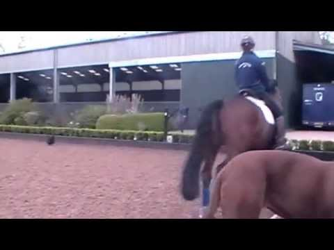 Carl Hestor's Dressage Lesson With a Chicken!
