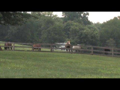 Look Back at Native Dancer & Sagamore Farm