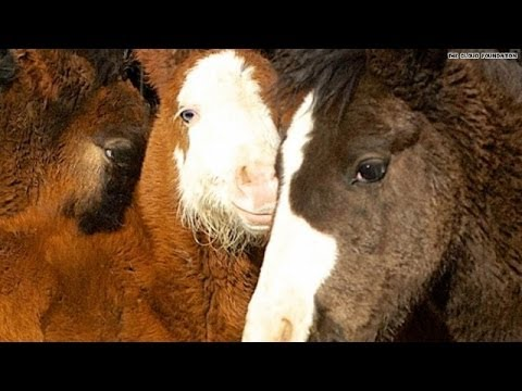 US Government Rounds Up 41 Wild Horses for Slaughter