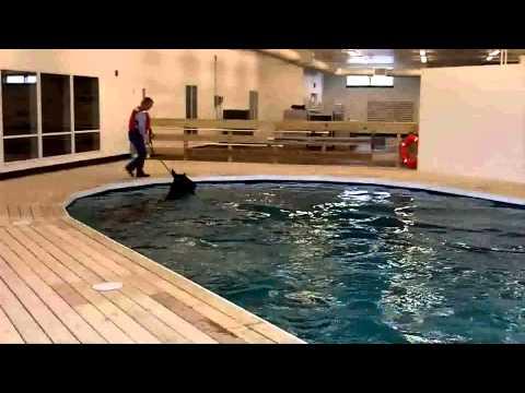 Equine Swimming Pool Demo