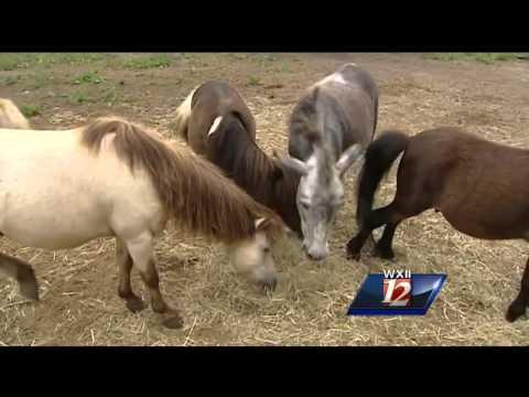 Saving Local North Carolina Equine Therapy Program