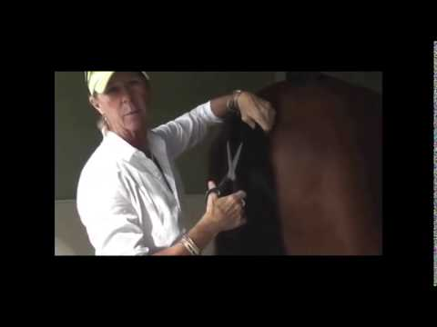 How to Trim Your Horse's Tail for Shows