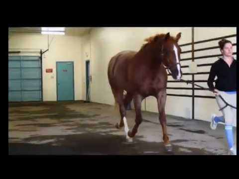 Lameness Lab #1: Is This Horse Lame? Training Your Eye to See Lameness by Equine Guelph