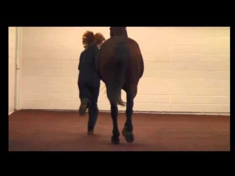 Lameness Lab #4: Is This Horse Lame? Training Your Eye to See lameness by Equine Guelph