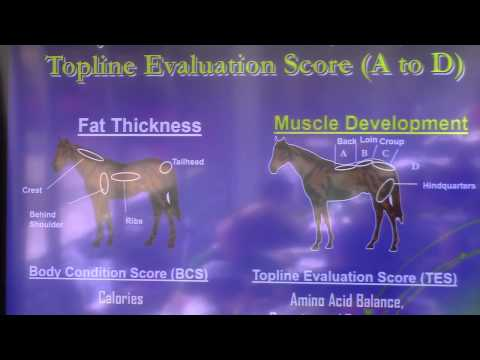 Body Conditioning Score vs Topline Conditioning Score in Horses