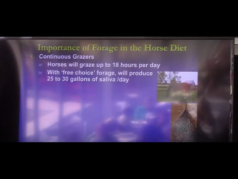 Colic Prevention: It's In the Forage
