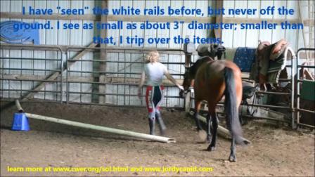 """Blind Horse """"Sees"""" Via Echolocation unit!"""