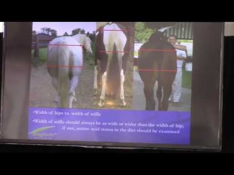 How to Increase Muscle Mass in Horses with Nutrition Alone!