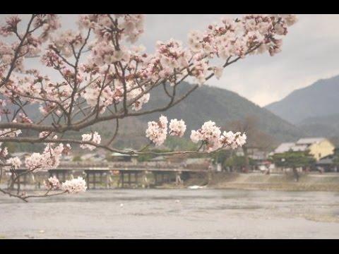 2017 Cherry Blossoms in Arashiyama, Kyoto(2017年春・嵐山の桜)