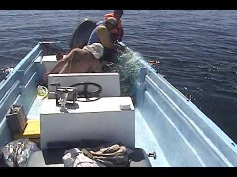 Saving A Humpback Whale, Valentina.