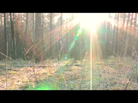 Tony Samara's 'Forest Meditation' • TonySamara.org