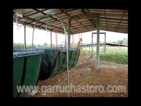 Cable vía para ganadería + garruchastoro + ganado + garrucha ceba intensiva