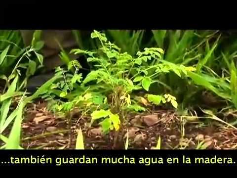 AGRO20: Documental sobre Moringa