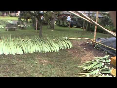 Almacenamiento y pos cosecha de la penca de sabila