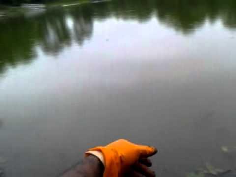 catching bluegill in 30 seconds