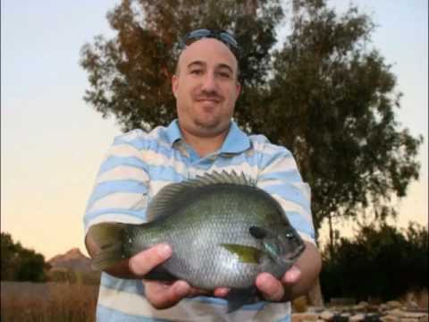 Big Bluegill part1