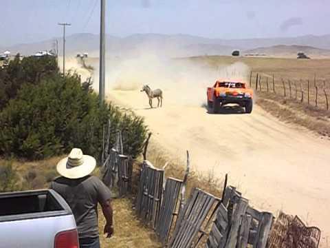 baja 500 2013 - robby vs burro