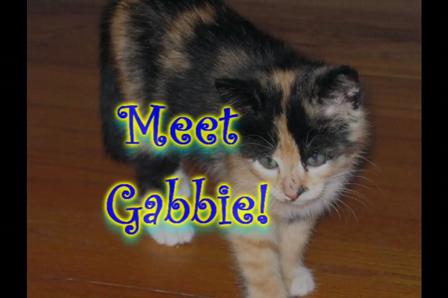 Meet Gabbie - Diva Kitty!