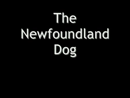 The Newfoundland Dog