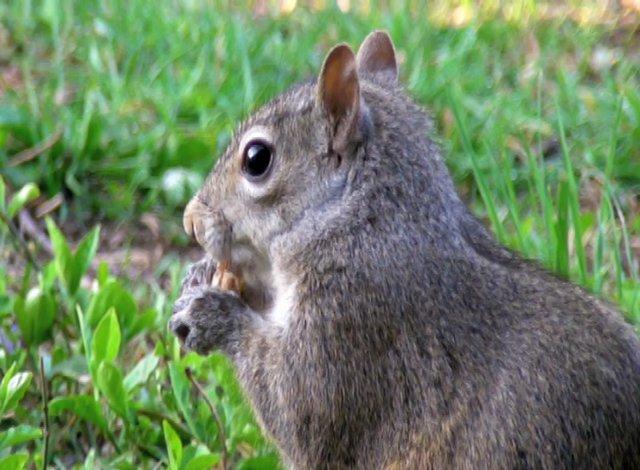 Squirrelygig