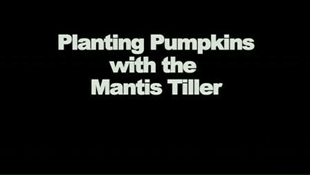 Planting Pumpkins