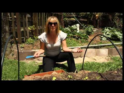 Nikki - My Sustainable World_1.wmv