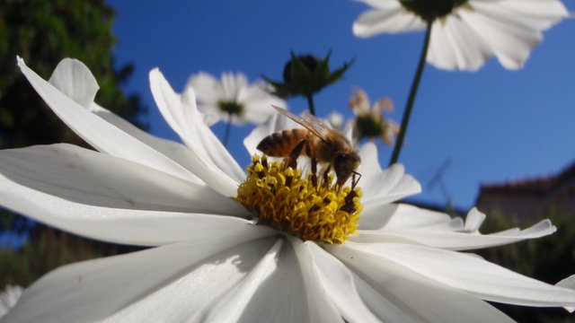 Vanishing of the Bees - Trailer