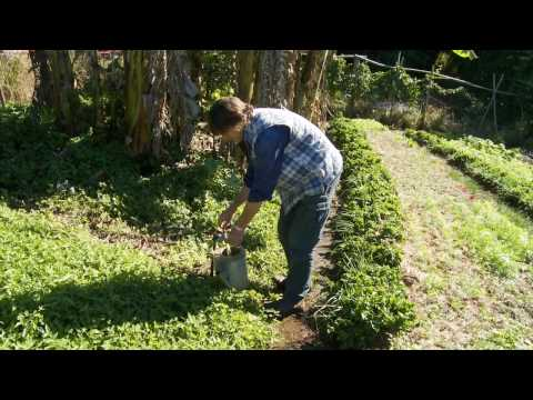 Permaculture Soils DVD Trailer