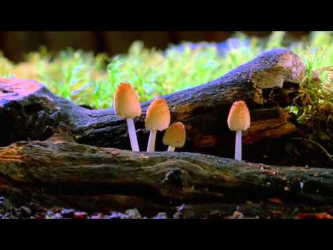 Mycologist, Paul Stamets, discusses the important role of mushrooms.