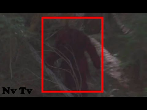 FEARED!! HIKER CHASED BY A GIANT BIGFOOT!! - California, USA (2016) - HD