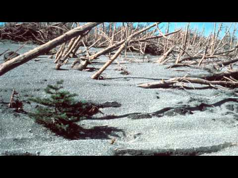 AS: Quick Biological Recovery at Mount St. Helens