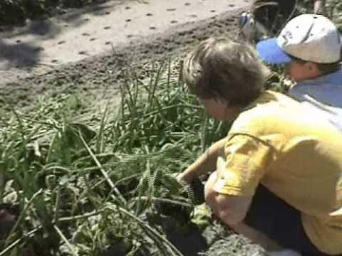 Sweetwater Organic Community Farm, Tampa