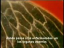 "Video Del Ganoderma Lucidum ""En Español"""