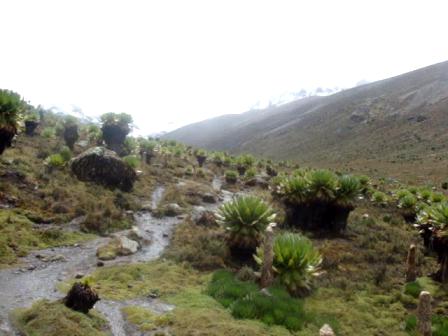 climbing mount Kenya, climbing Mount Kenya in Kenya, YHA-Kenya Travel