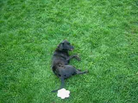 my dog rolling