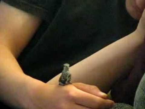 Rescued Baby Hummingbird