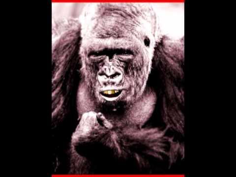 King Kong Reccomends OK-L.A.