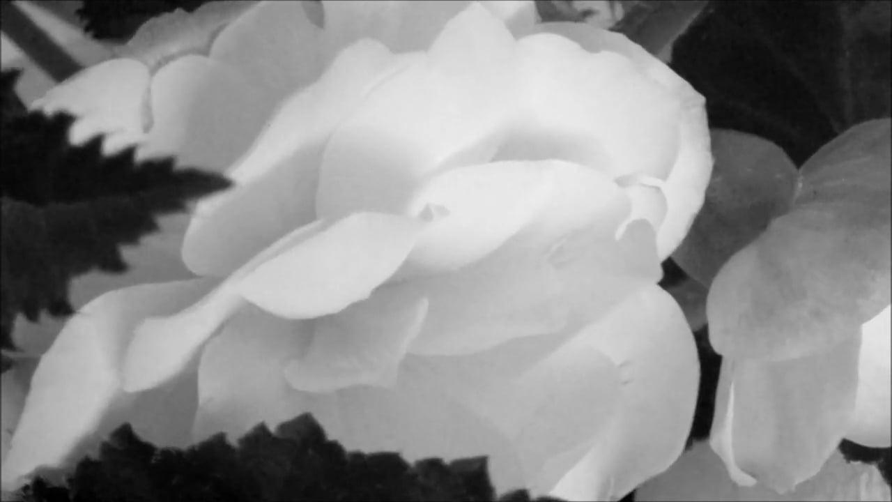 OUR AWESOME BUZZ - Michał Rutkowski (music video)