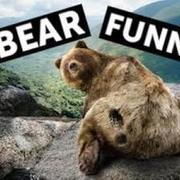 Bear Funny Comedy