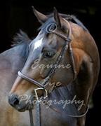 Equine Eye Photography
