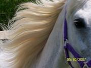 Heaven Can Wait Equine Rescue