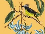 bird in paridise 1